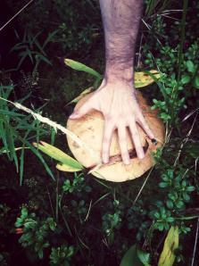 Epic mushroom.